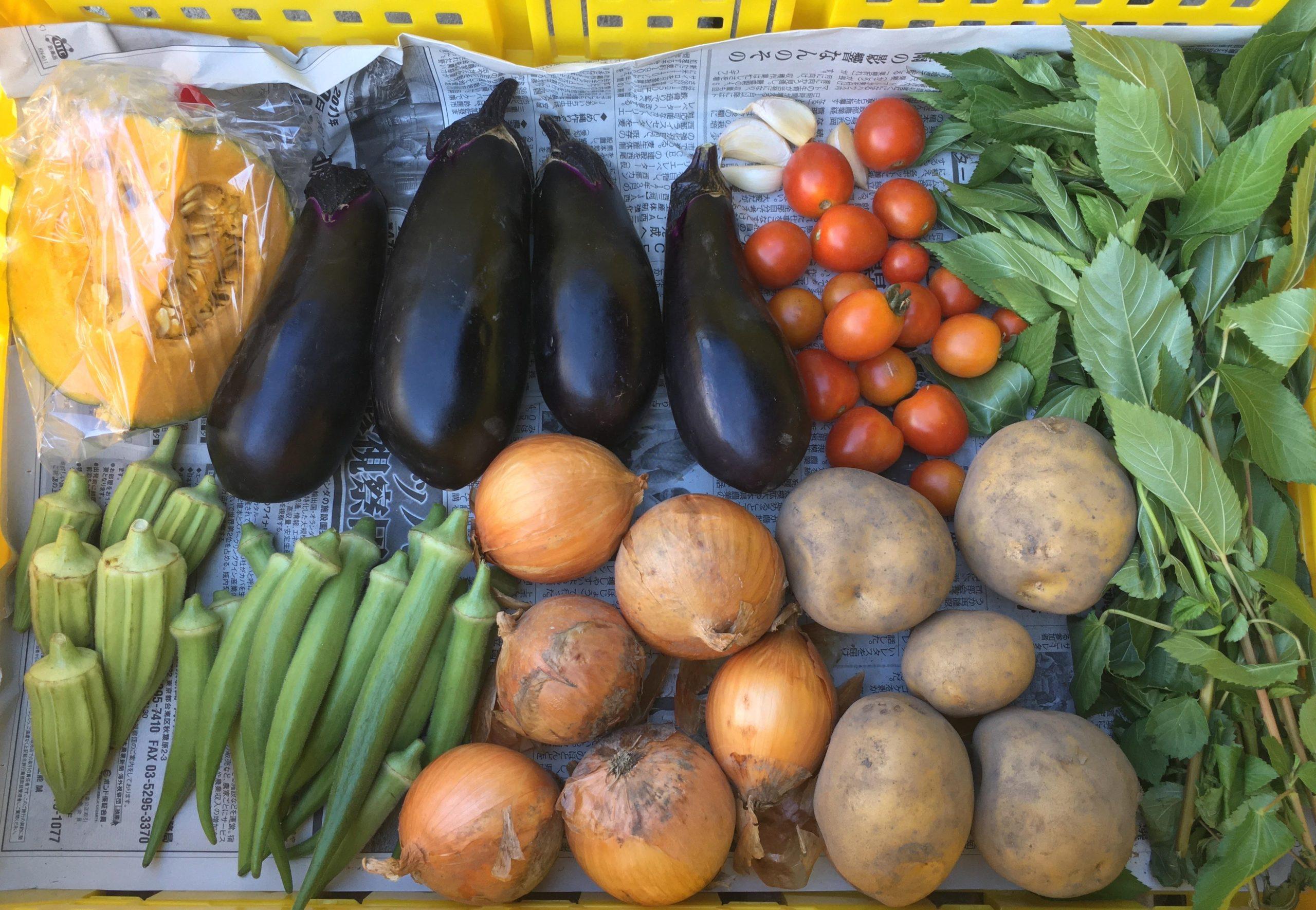 野菜セット9月